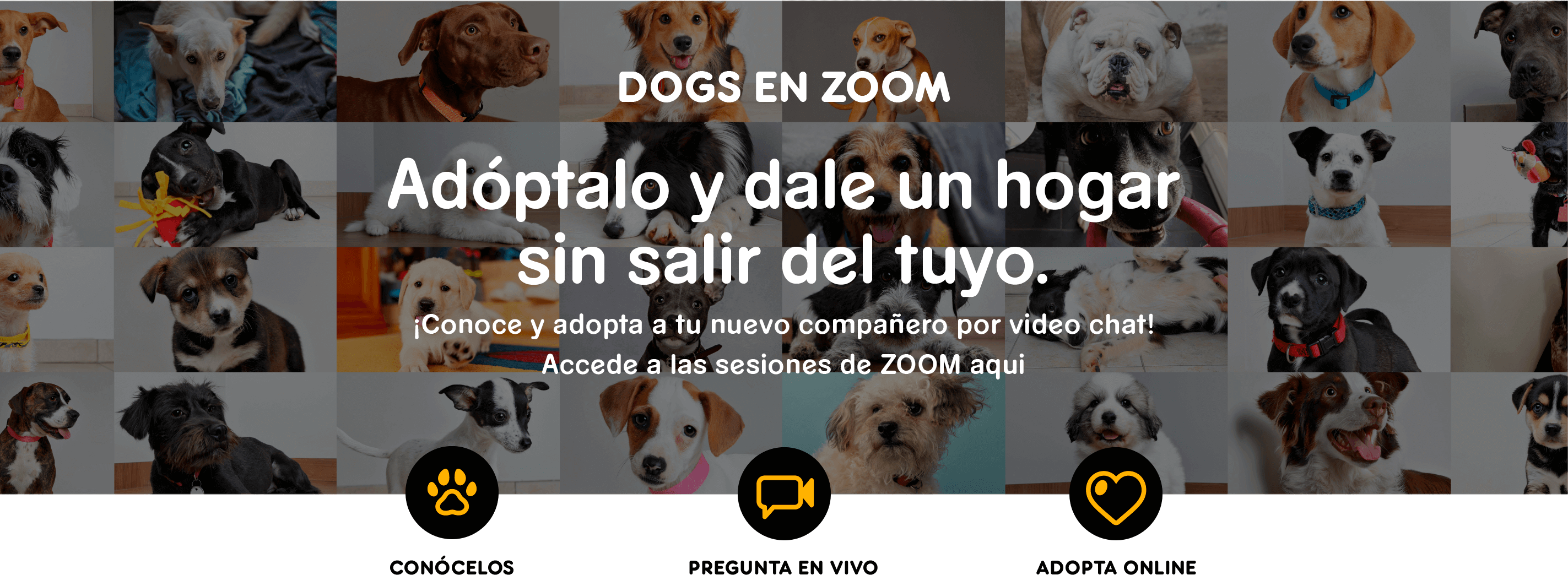Doogs en zoom